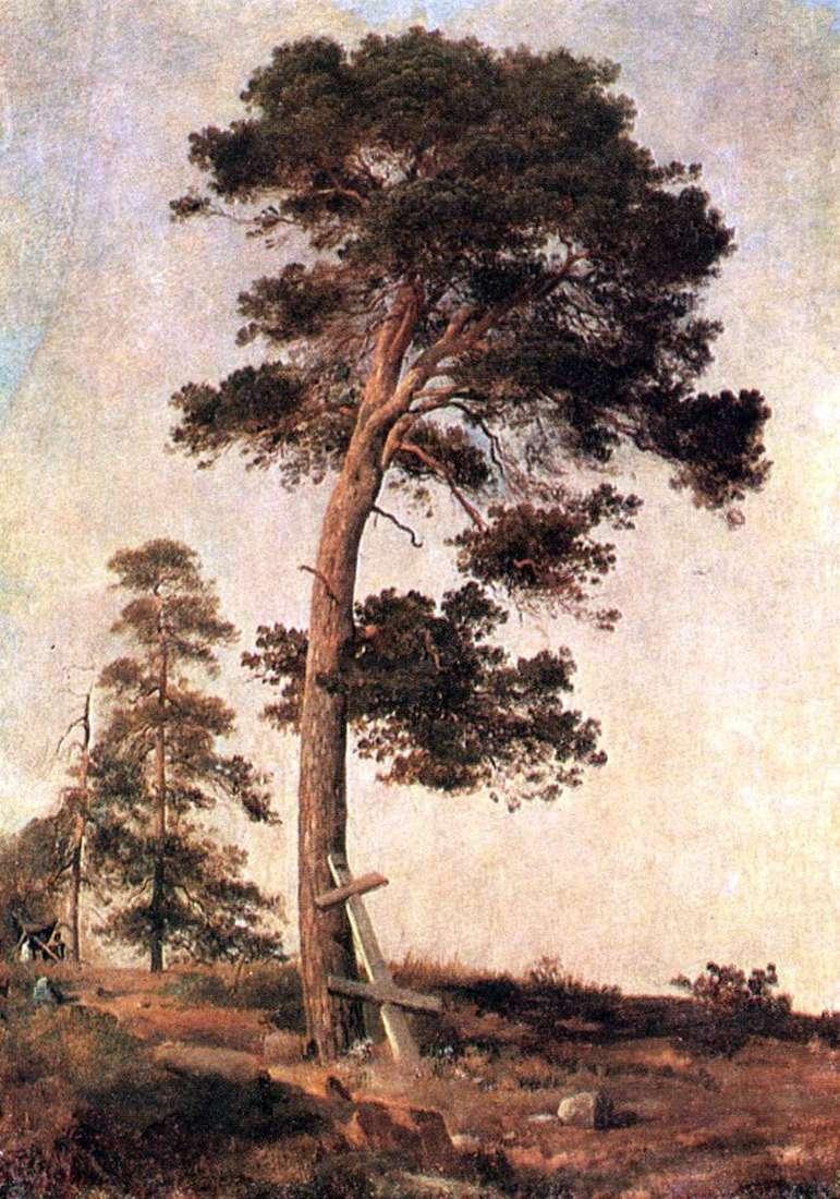 Описание картины Ивана Шишкина «Сосна на Валааме»