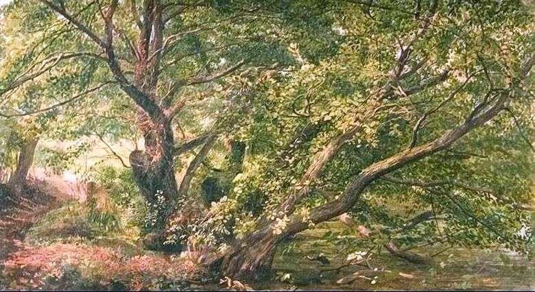 Описание картины Александра Иванова «Деревья у ручья»