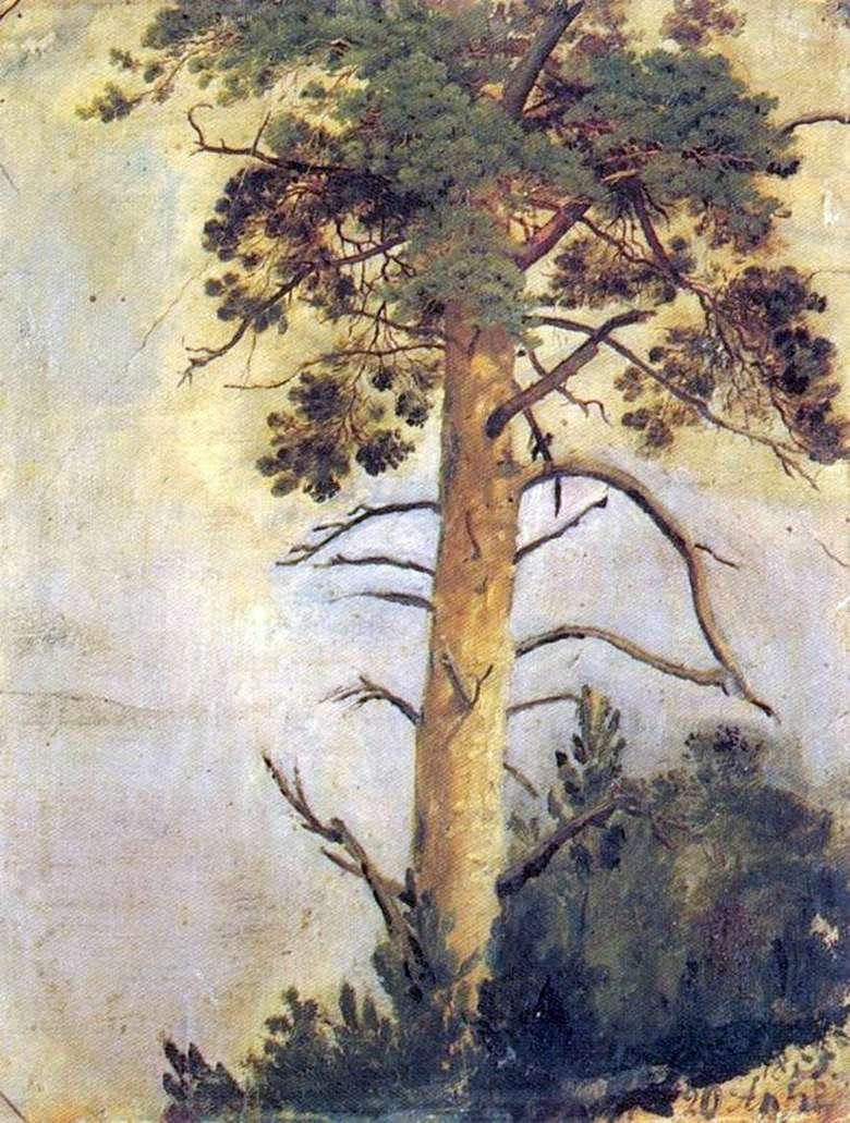 Описание картины Ивана Шишкина «Сосна на скале»