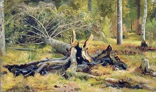 Описание картины Ивана Шишкина «Упавшее дерево»