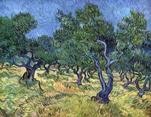 Описание картины Винсента Ван Гога «Оливковая роща»
