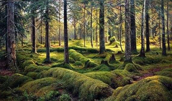 Описание картины Ивана Шишкина «Лесное кладбище»