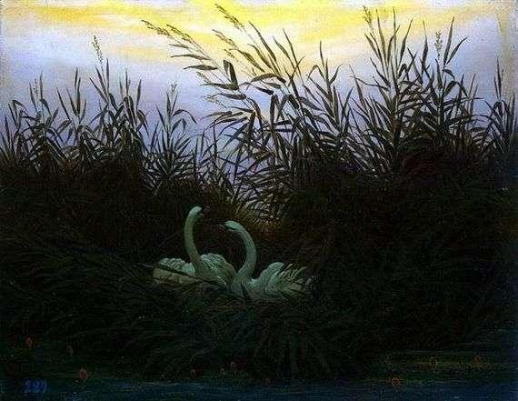 Описание картины Каспара Фридриха «Лебеди в камышах»