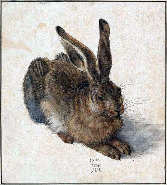Описание картины Альбрехта Дюрера «Заяц»