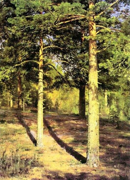 Описание картины Ивана Шишкина «Сосны, освещенные солнцем»