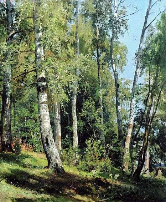 Описание картины Ивана Шишкина «Березовая роща»
